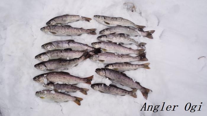 2016年、揖保川での解禁日の釣果です。