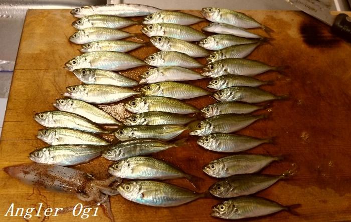 垂水漁港でのサビキ釣り釣果です。