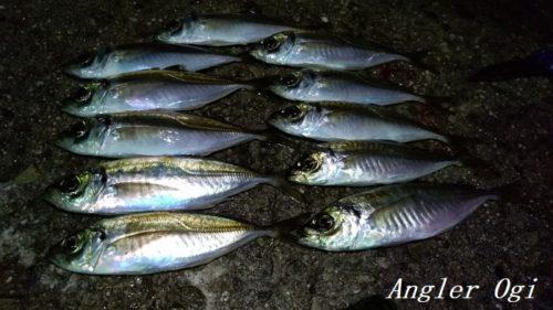 淡路島東浦の漁港で、サビキで良型アジをゲット!